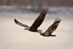 08 Eagle02