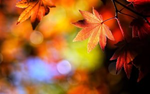 autumn-leaves-wallpapers-high-quality-93466008-2